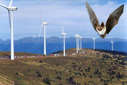 scientists-bat-deaths-wind-turbines
